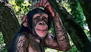 611_chimpance-02