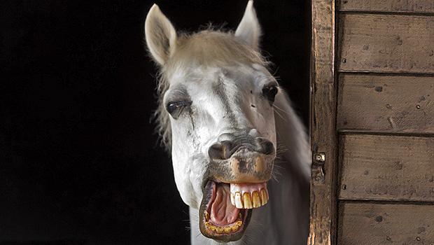 655_caballo-en-carcajada