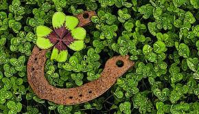 1048_trebol-de-cuatro-hojas-y-herradura
