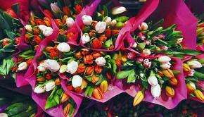 1050_flores