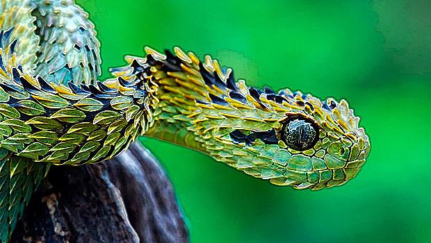 1072_serpiente